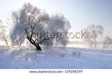 Beautiful winter landscapes taken on a clear day - stock photo