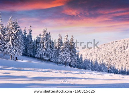 Beautiful winter morning with snow covered trees. - stock photo