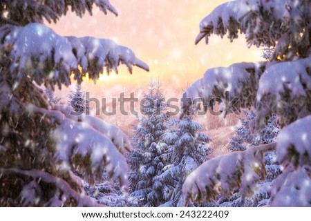 Beautiful winter nature, majestic view on mountainous landscape through fir tree branch covered with white snow in mild yellow sunset, wintertime fairytale - stock photo