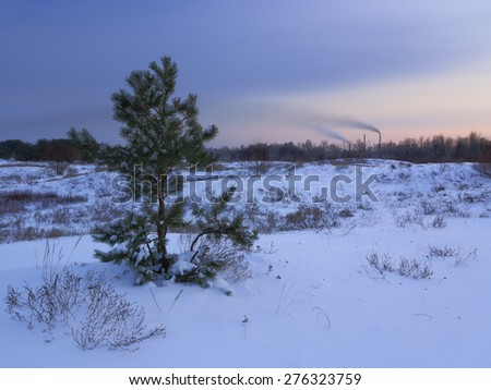 beautiful winter pine sheltered snow at sunset - stock photo