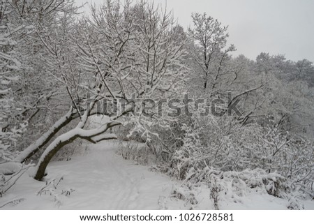Beautiful winter scene in the park near Yauza river after heavy snowfall, Babushkinkiy district, Moscow.
