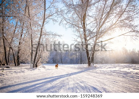 Beautiful winter scenery with white trees and dog