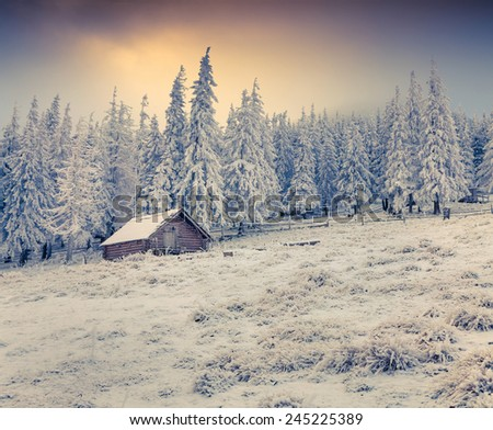Beautiful winter sunrise in the foggy mountains. First frost in December. - stock photo