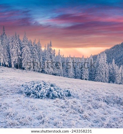 Beautiful winter sunrise in the mountain forest - stock photo