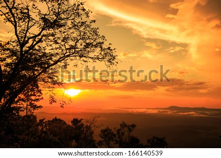 Beautiful winter sunset in the nature,  with silhouettes of  tree