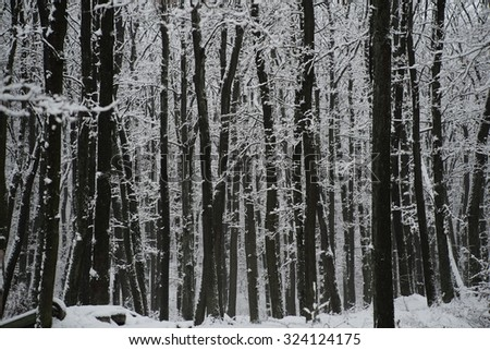 Beautiful winter white snowy frosty frozen cold landscape with snow on tree branches in forest outdoor on natural seasonal background with no people, horizontal picture - stock photo