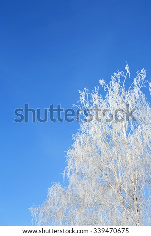 Beautiful winter white snowy frosty frozen cold landscape with snow on tree branches in forest on hill with blue sky sunny day  - stock photo
