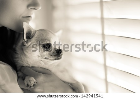 Beautiful woman and his chihuahua together in front of window