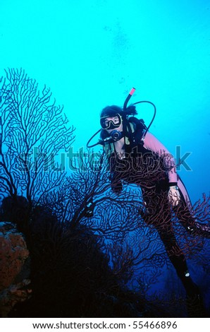Beautiful woman diver exploring a coral reef - stock photo