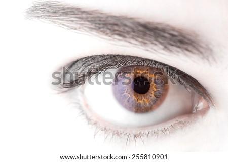 beautiful  woman eye macro shot - stock photo