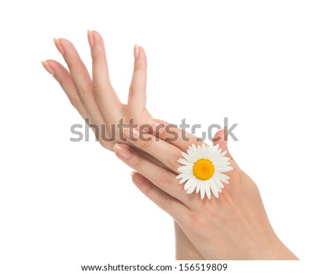 Beautiful woman french manicured hands with fresh camomile daisy flower isolated on a white background - stock photo