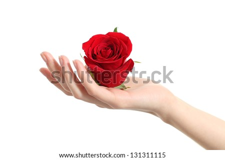 Beautiful woman hand holding a red rose on a white isolated background - stock photo