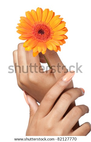 Beautiful woman hands with perfect manicure holding a flower, closeup shot, isolated on white - stock photo