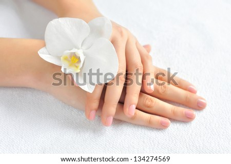 Beautiful woman hands with white orchid flower - stock photo