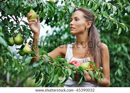 Beautiful woman picking the pear in the garden - stock photo