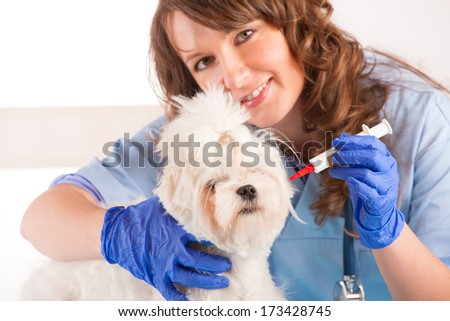 Beautiful woman veterinarian holding cute maltese dog standing in the treatment room and reaching for medicine