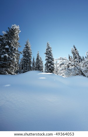 Beautiful wood landscape in the winter - stock photo