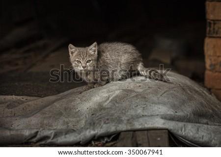 Beautiful Yard cat in abandoned house - stock photo