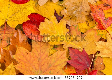 Beautiful yellow and red autumn leaves background texture