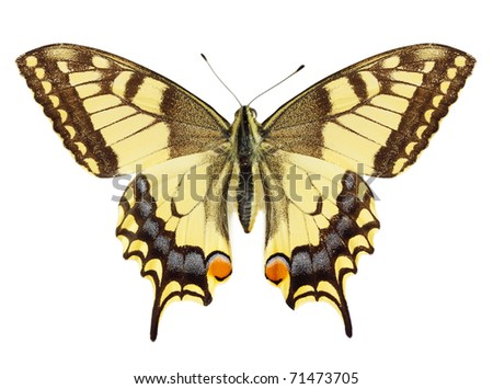 Beautiful yellow butterfly against the white background - stock photo