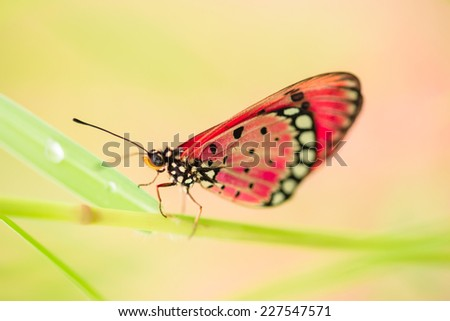 Beautiful yellow butterfly in green grass field  - stock photo