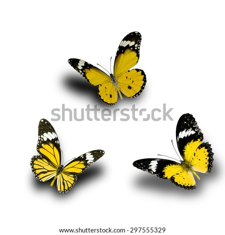 Beautiful Yellow butterfly upper wing profile flying up - stock photo