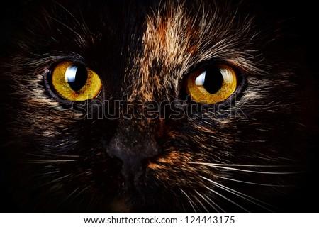 Beautiful yellow cat's eyes - stock photo