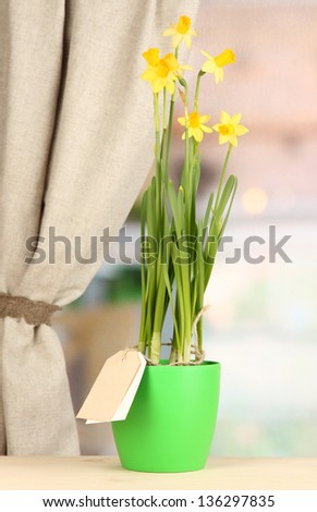 Beautiful yellow daffodils in flowerpot on window background - stock photo