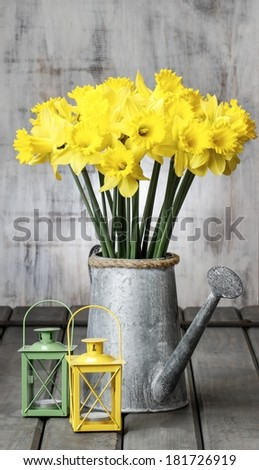 Beautiful yellow daffodils in silver watering can and small iron lanterns on grey wooden table - stock photo
