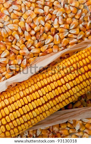 Beautiful yellow ear of corn on seed background, top view