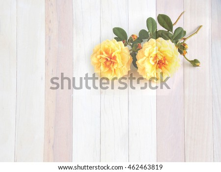 Beautiful yellow English rose on wooden .Picture look like painting background