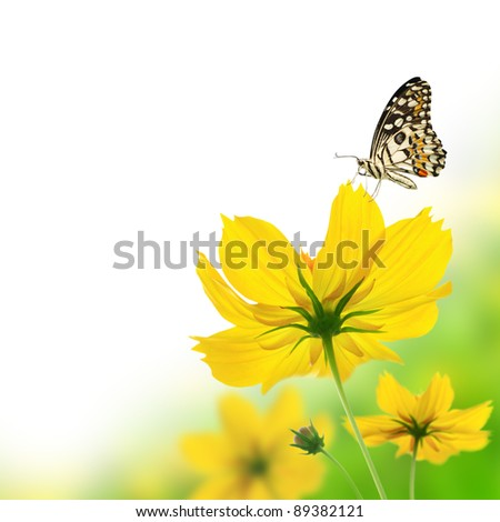 Beautiful yellow floral and butterfly - stock photo
