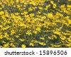 Beautiful yellow flower - stock photo