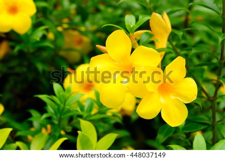 Beautiful yellow flower bloom on green natural background - stock photo