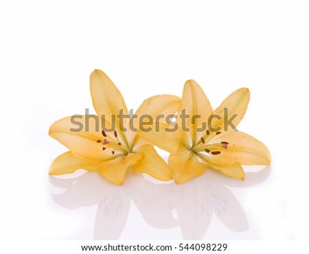 Beautiful yellow flower bouquet isolated