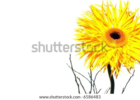 beautiful yellow flower isolated over white background