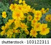 beautiful yellow flowers - stock photo