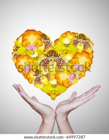 Beautiful yellow flowers - stock photo