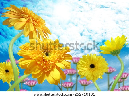 Beautiful yellow gerber on a blue sky background  - stock photo