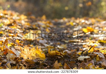 Beautiful yellow leaves in autumn park - stock photo
