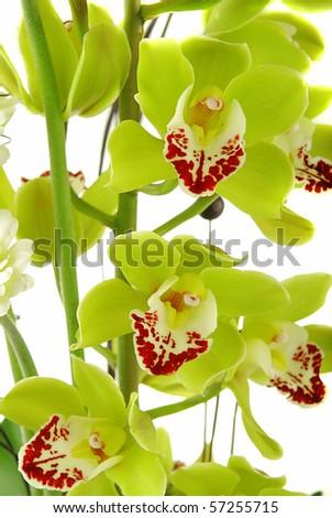 Beautiful yellow orchid (cymbidium) isolated on white background - stock photo
