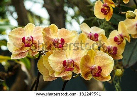 Beautiful Yellow Orchid Flower In The Forest - stock photo