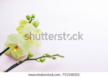 Beautiful yellow orchid flowers on light background with copyspace for text, top view, flat lay
