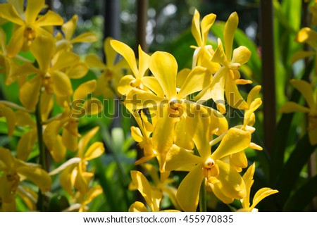 Beautiful yellow orchids - stock photo