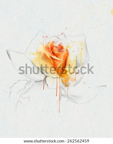 Beautiful yellow rose, with elements of the sketch, watercolor illustration - stock photo