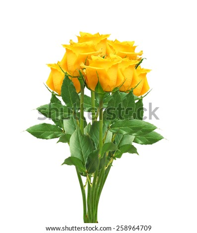 beautiful yellow roses isolated on white background - stock photo