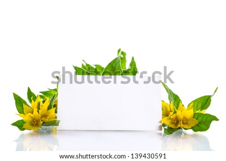beautiful yellow summer flowers on a white background