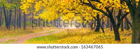 Beautiful yellow trees in a autumn forest - stock photo