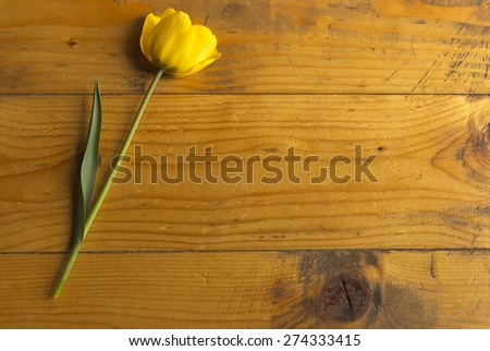 Beautiful yellow tulip on a a wooden background.Elegant design of Easter or mothers day gift over wooden background. - stock photo