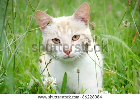 Beautiful young cat in the grass - Young cat hides in the grass - stock photo